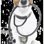 Canada del oro pet clinic – vet in tucson, az usa :: home