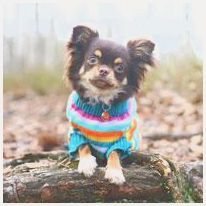 Pet Clothes: A Fashion Statement or a Necessity?