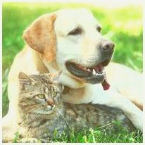 Caring for Your Older Pet