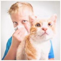Managing Pet Allergies in Kids
